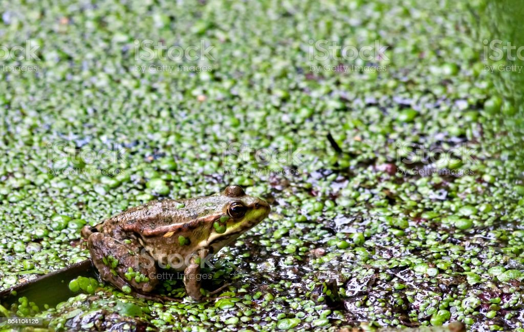green frog sits on the Board royalty-free stock photo