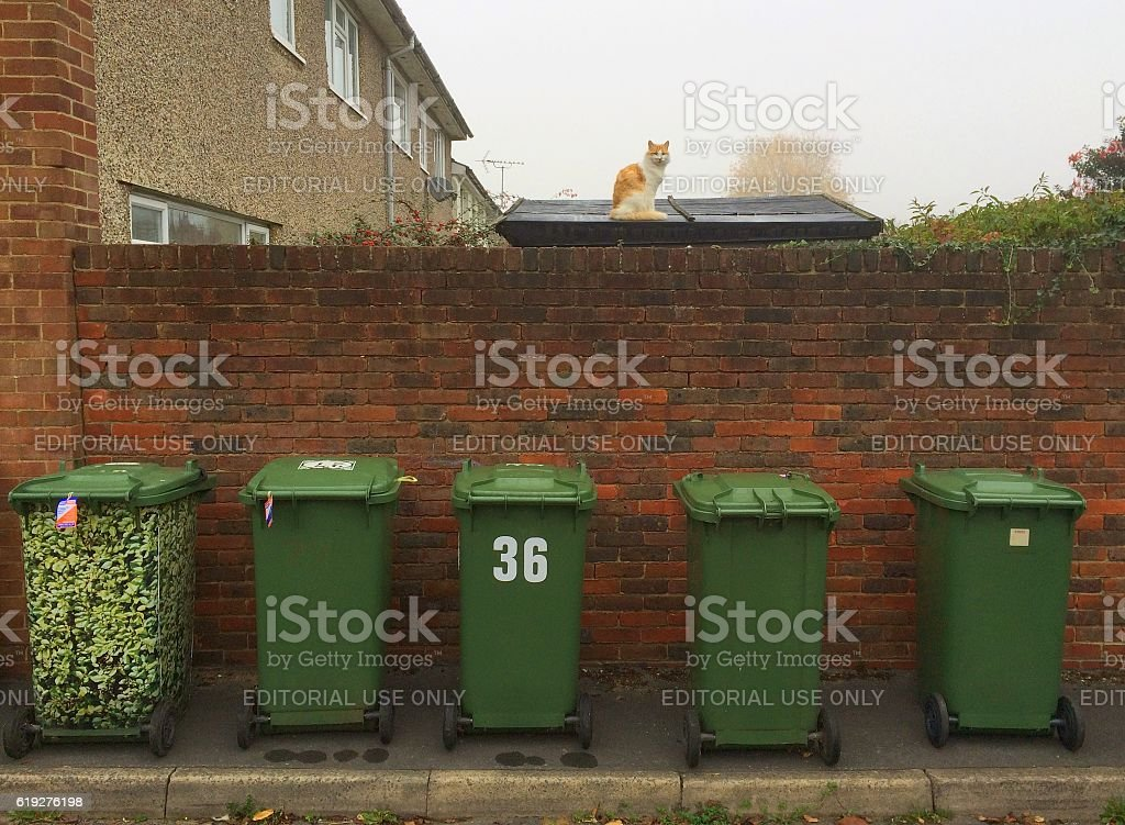 Green Garbage Collection Bins stock photo
