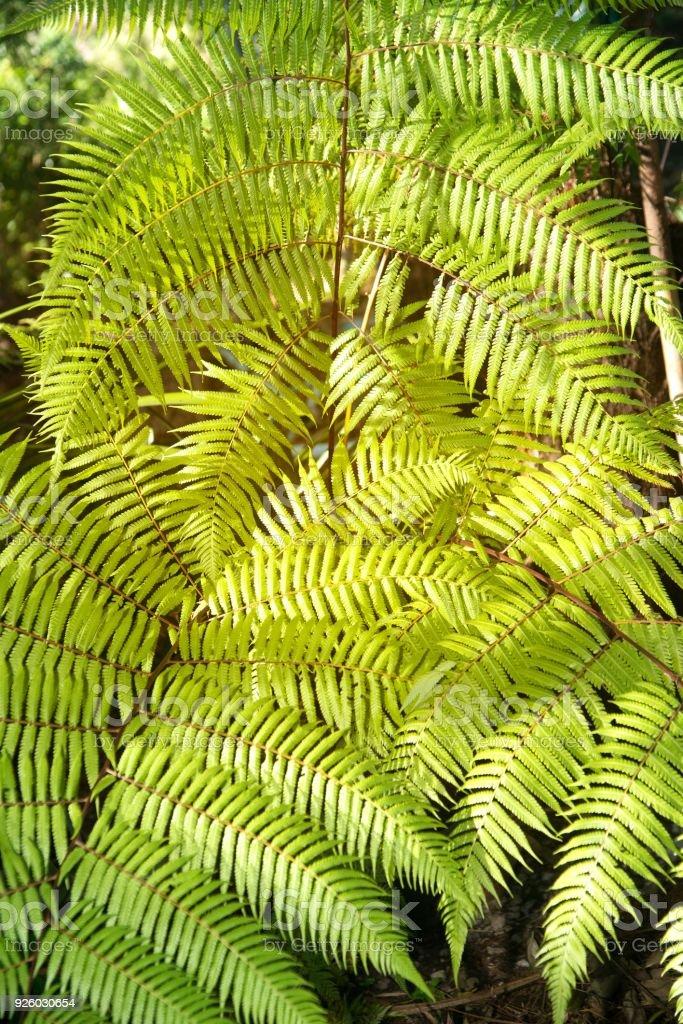 Green Garden Background Of Fishbone Fern Or Sword Fern Stock Photo ...