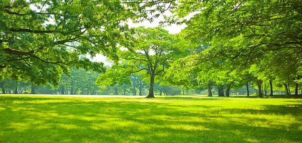 istock green garden 1131805687