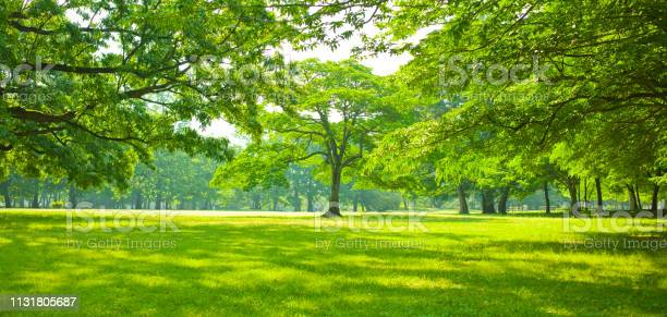 Green garden picture id1131805687?b=1&k=6&m=1131805687&s=612x612&h=wv5l0fzgkutbxooquqotbzvmllfpld9oxeo mydqkdq=