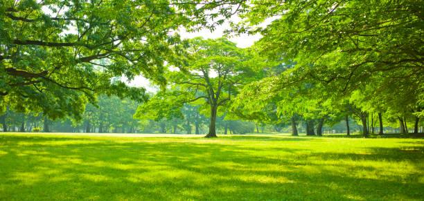 jardín verde - árbol fotografías e imágenes de stock