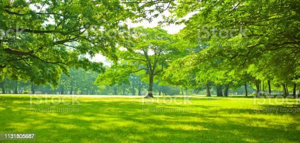 Photo of green garden