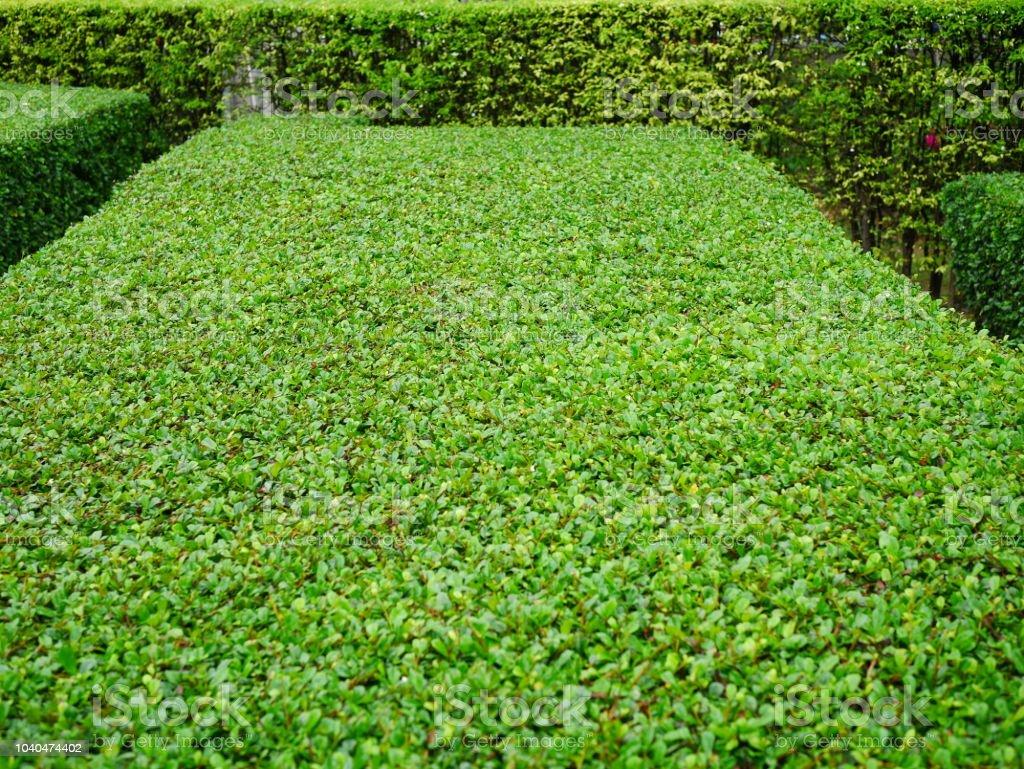 Green garden wall stock photo