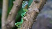 Green gecko on tree trunks