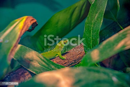 green gecko sits in the jungle on a tree trunk