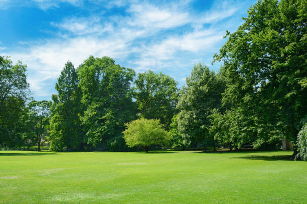 Green glade covered with grass in park. Green glade covered with grass in park. Free space for text. glade stock pictures, royalty-free photos & images