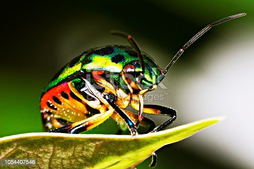 1054407300istockphoto Green glitter beetle on leaf. 1054407546