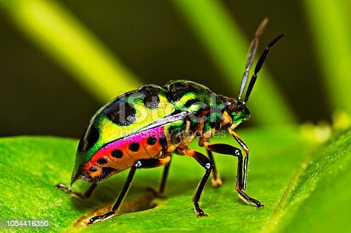 1054407300istockphoto Green glitter beetle on leaf. 1054416350