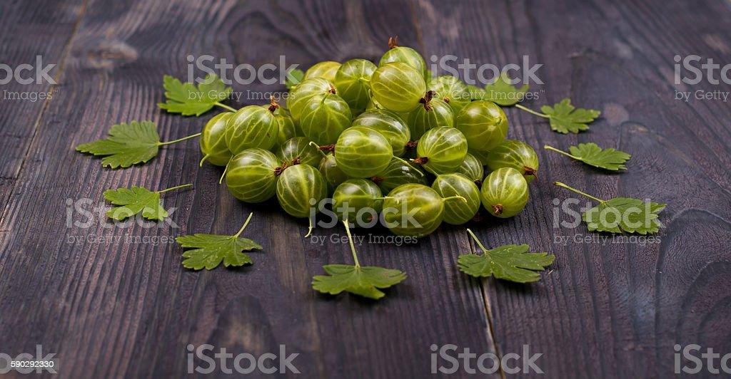 Green gooseberry on an royaltyfri bildbanksbilder