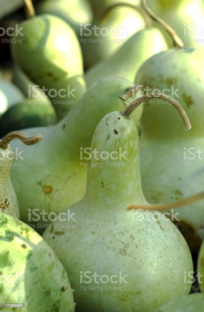 Green Gourds royalty-free stock photo