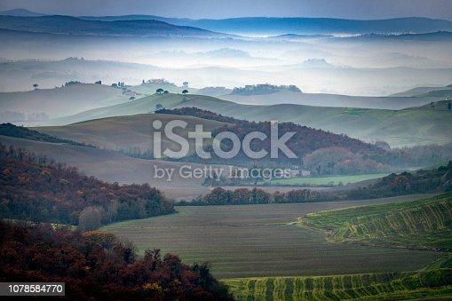 Green grain field in winter, Tuscany, Italy, Europe,Nikon D850
