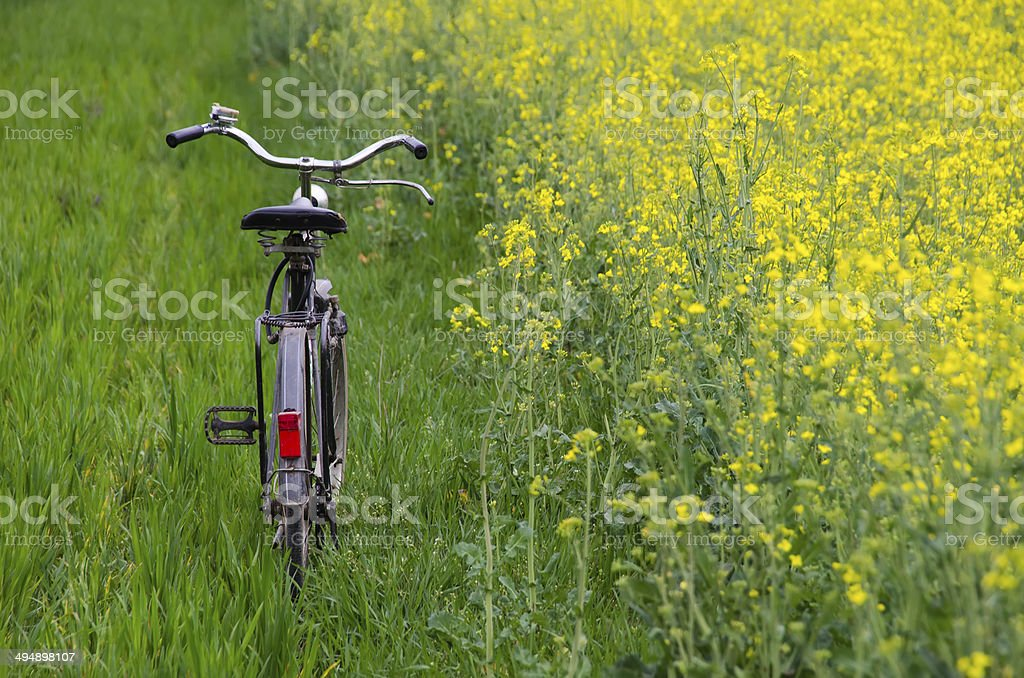Зеленые поля и урожай семян рапса семян масличных культур стоковое фото