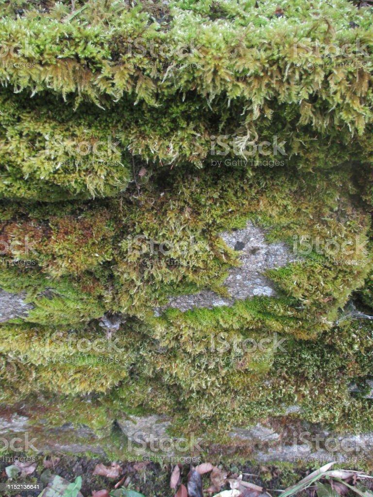 Mur Vegetal Plante Grasse photo libre de droit de mur de bloc de granit vert fougères