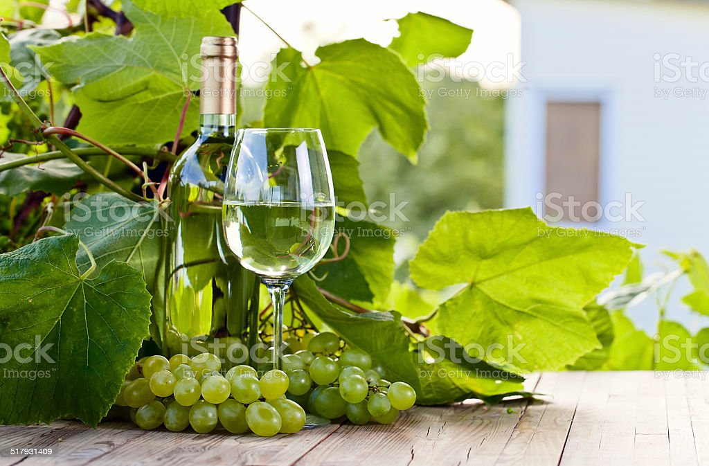 green grape and white wine in vineyard stock photo