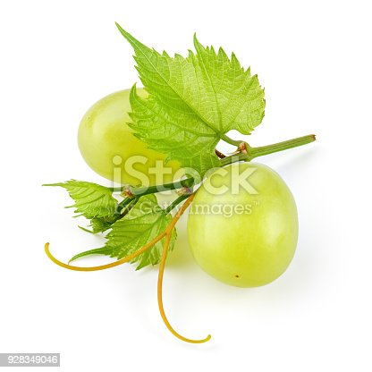 Green grape. Two grape berries with leaves and tendrils isolated on white. Full depth of field.