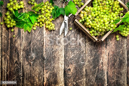istock Green grapes in a box. 900568834