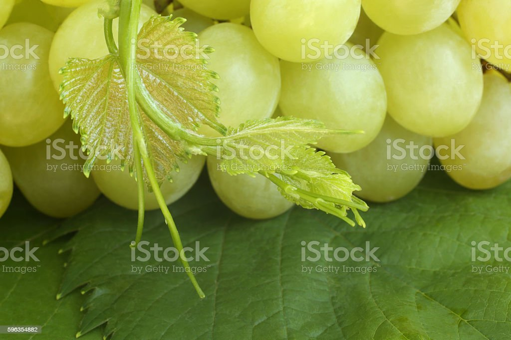 Green grapes on leaves royalty-free stock photo