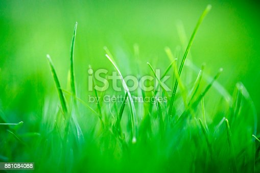 513070488 istock photo Green Grass Abstract Background 881084088