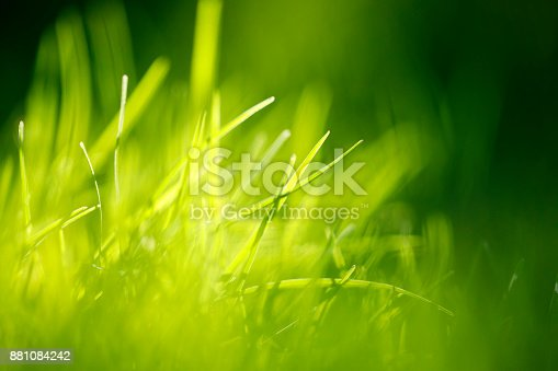 513070488 istock photo Green Grass Abstract Background 881084242
