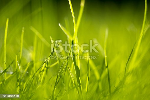 513070488 istock photo Green Grass Abstract Background 881084518