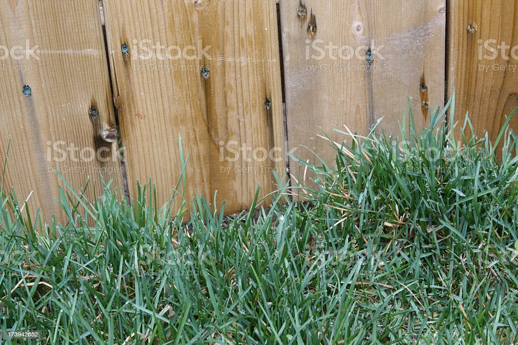 Green grass and a wood fence stock photo