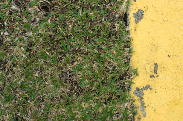 green grass and a yellow wall stock photo