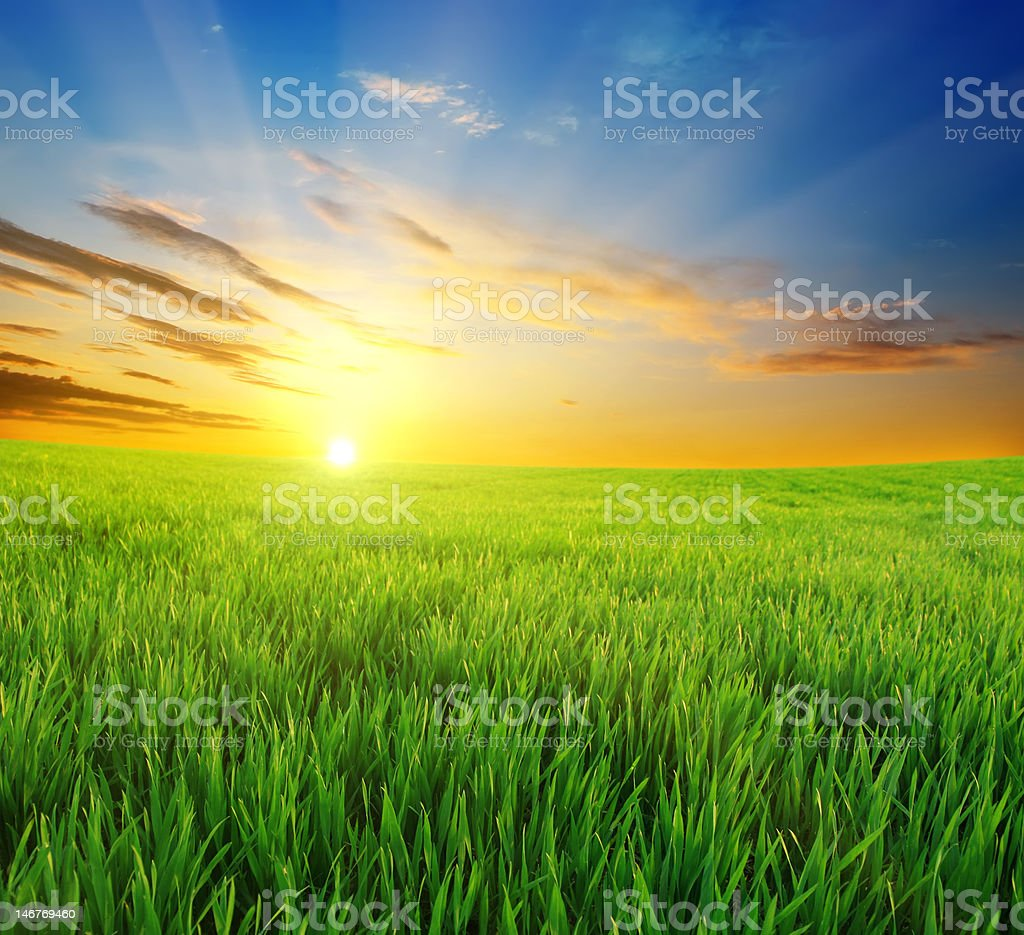 green grass and beautiful sunset royalty-free stock photo