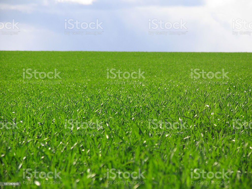 Green Grass and Blue Cloudy Sky royalty-free stock photo