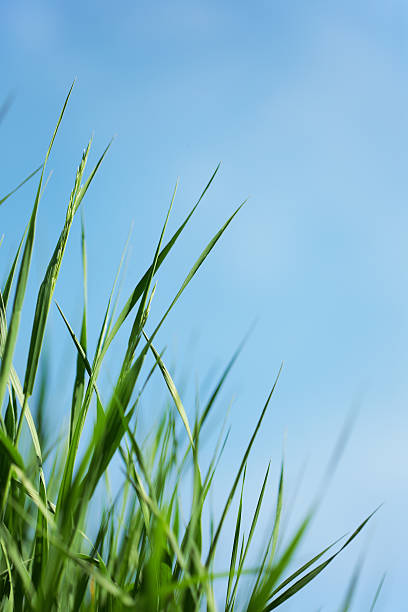 Green grass and blue sky background stock photo