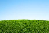 緑の芝生、ブルースカイ