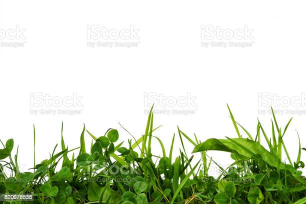 Green grass and clover frame at the bottom isolated on white with picture id820978538?b=1&k=6&m=820978538&s=612x612&h=jcpbqojdvfznvuysttmy1r8tctiokwtnhicfassman4=