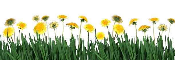 Grünem Gras und am Rand – Foto