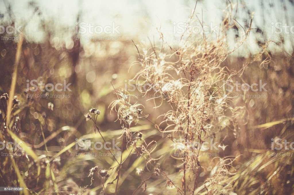 Green grass and dry grass, dry plants, dry leaves. stock photo