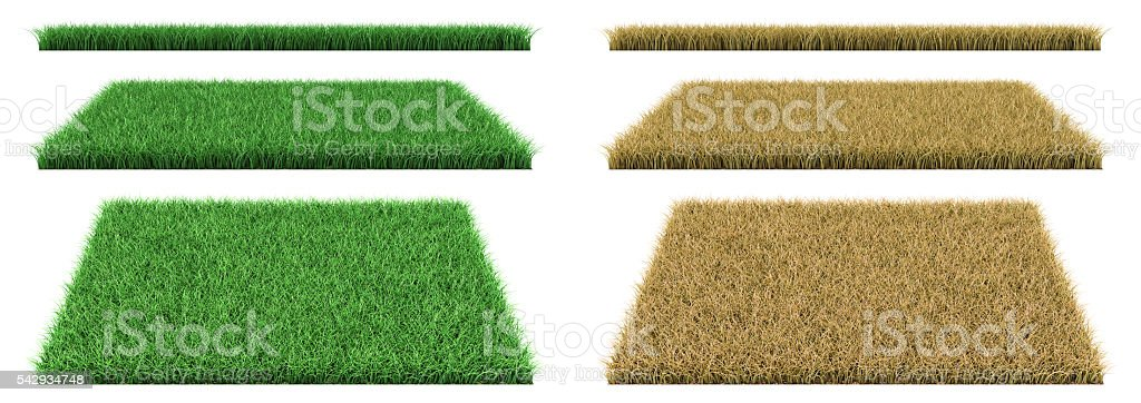 green grass and dry grass stock photo