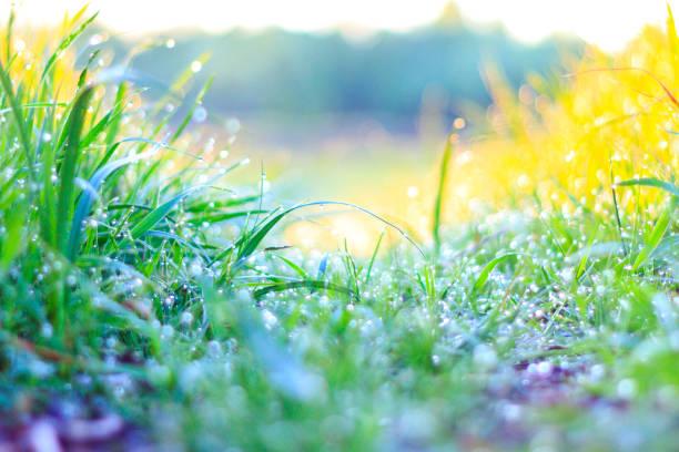 groen gras en verse dauw - dauw stockfoto's en -beelden