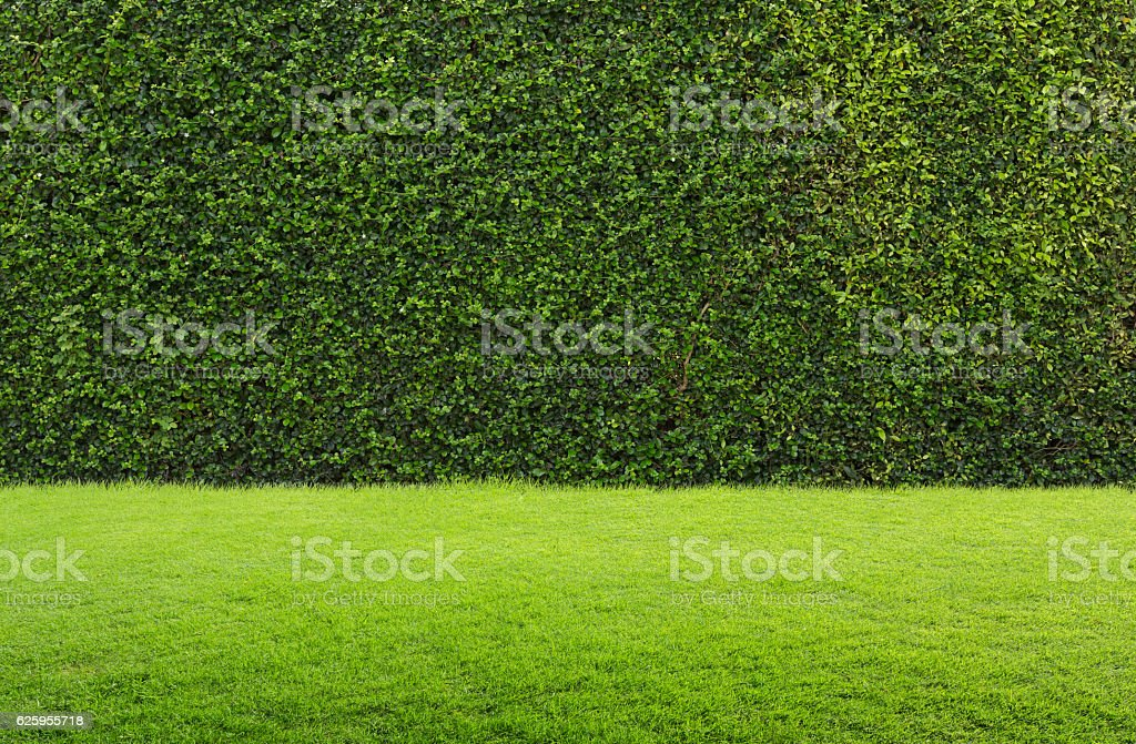 green grass and hedge stock photo