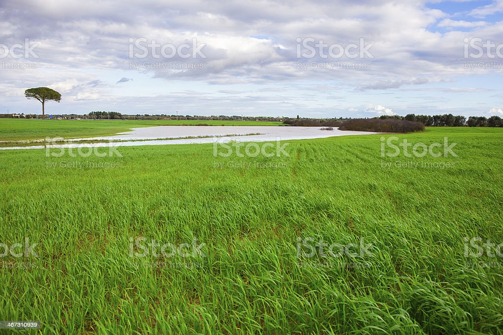 Green grass and lake stock photo