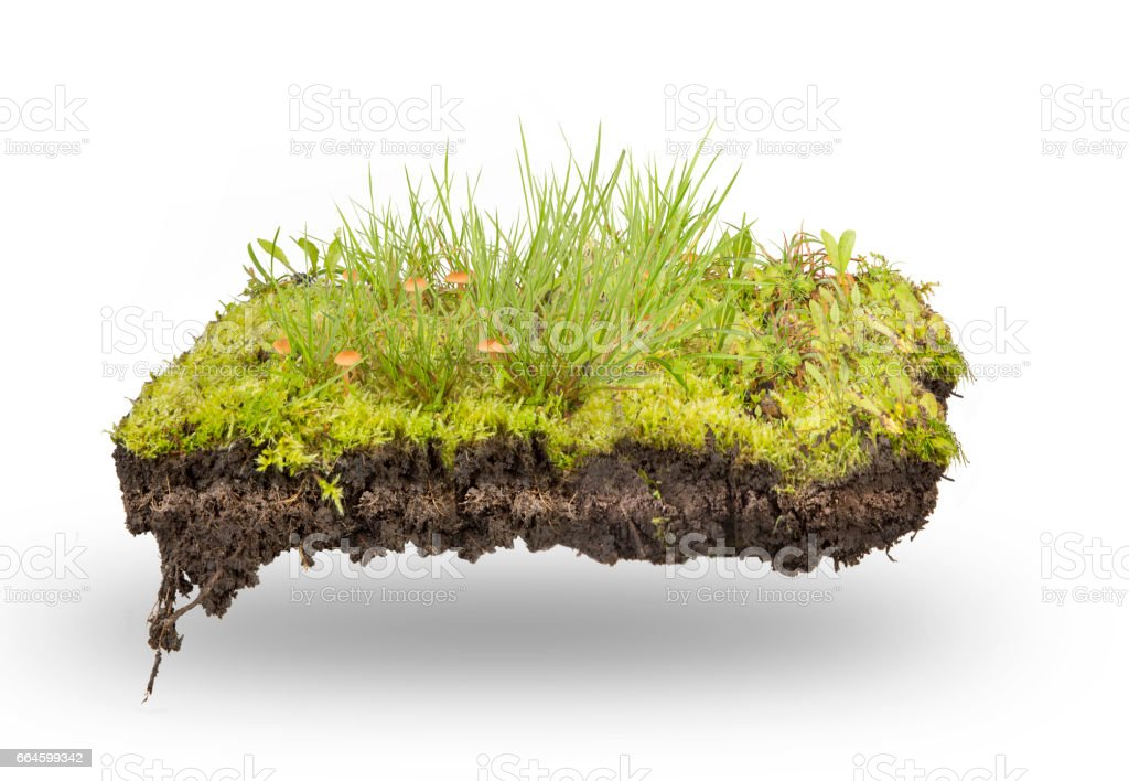 green grass and moss  isolated stock photo