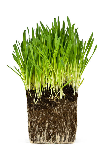 Green grass and roots stock photo