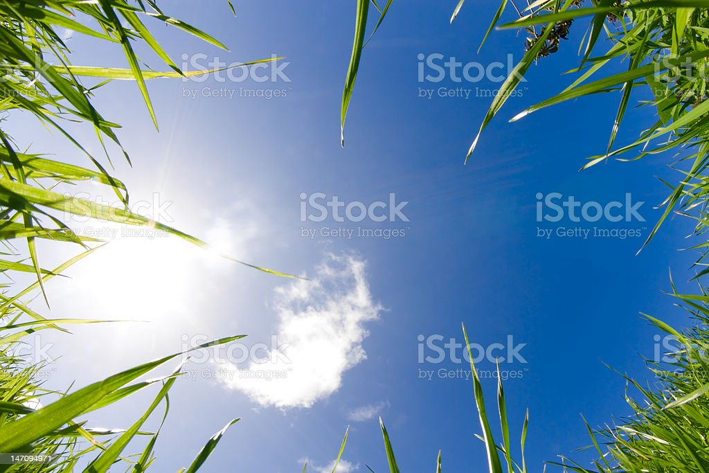 Green Grass and Sky XXL stock photo