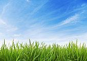 Green Grass and sky XXXL (70 mpx)
