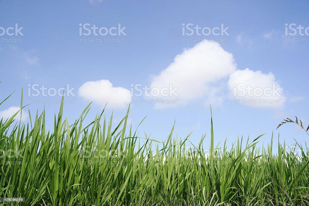 Green Grass and sky XXXL royalty-free stock photo