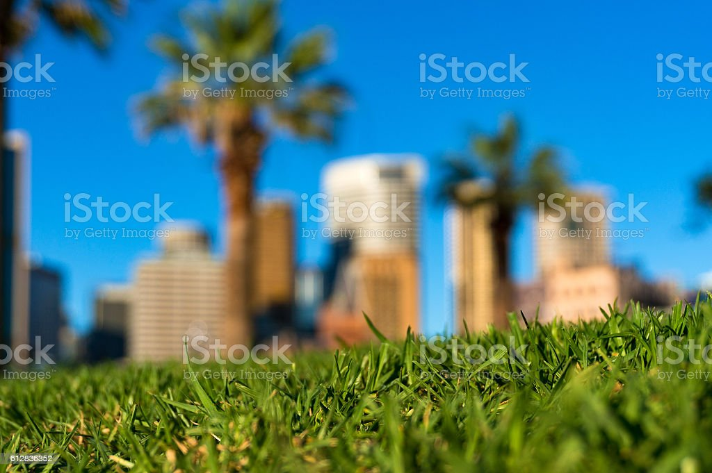 Green grass and skyscrapers. Urban nature concept stock photo