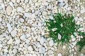 Green grass and stones. Park alley