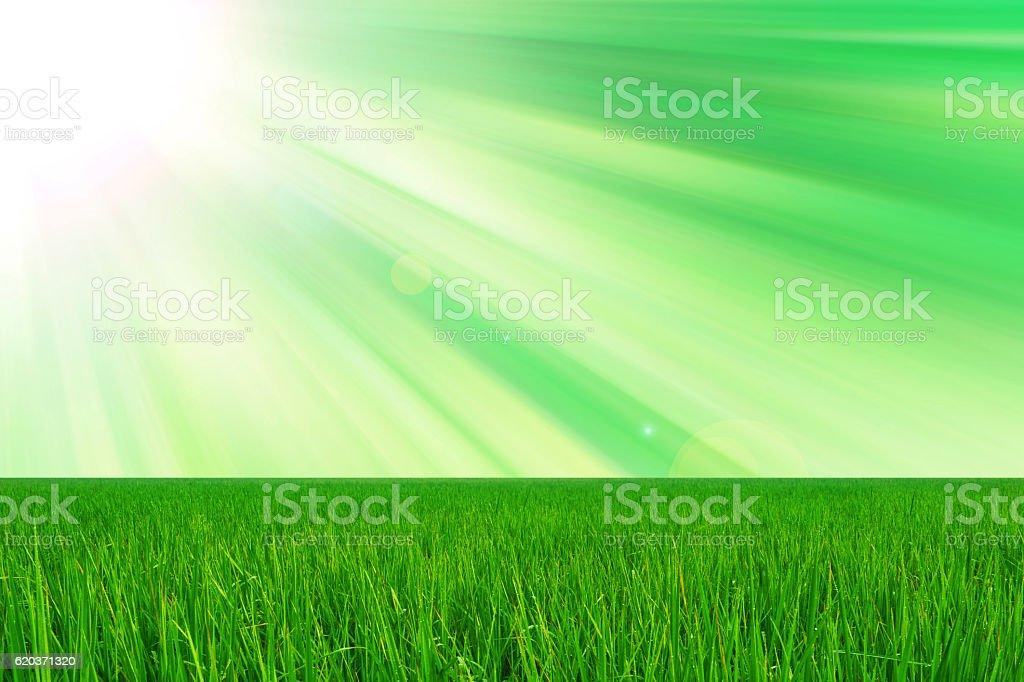 green grass and sun light  fresh nature  background zbiór zdjęć royalty-free