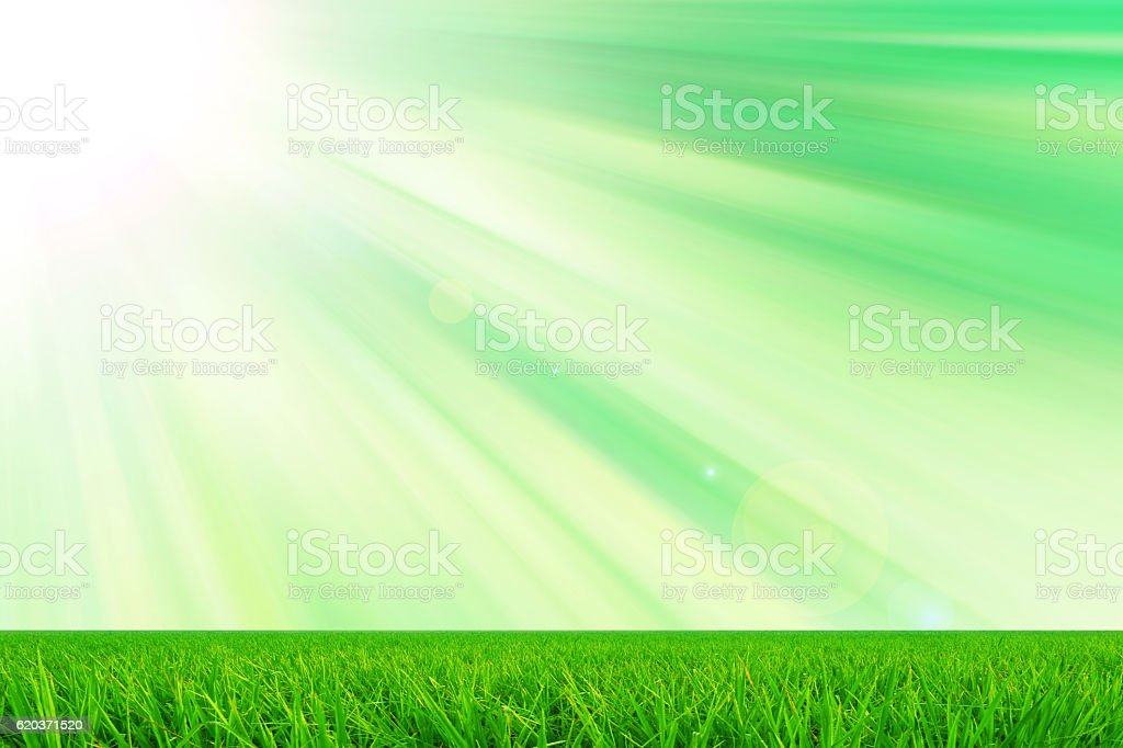 green grass and sun light  fresh nature  background foto de stock royalty-free