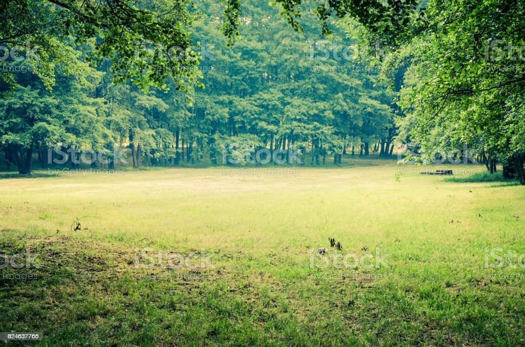 Green grass and trees. stock photo