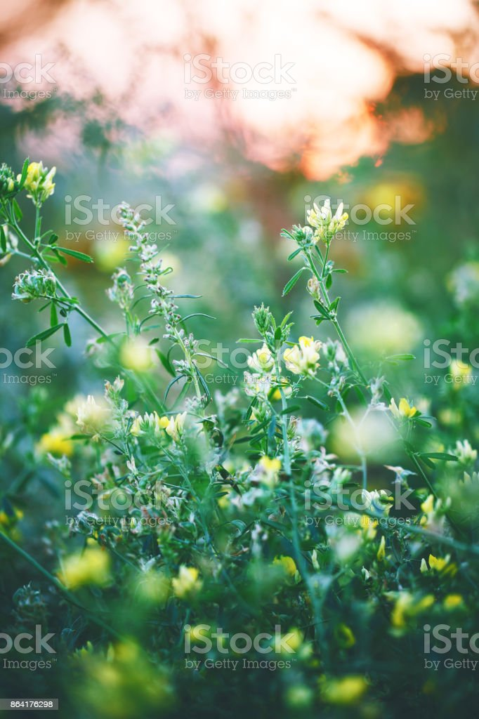 green grass and weed in garden in nature. Outdoor autumn photo royalty-free stock photo