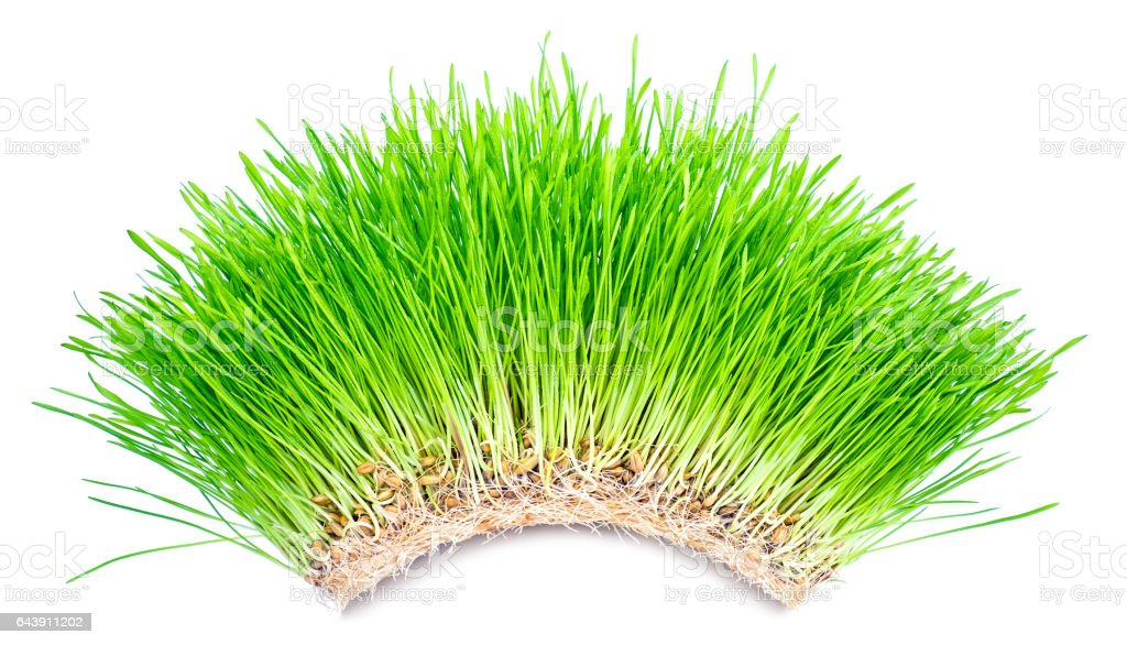 Green grass arch stock photo